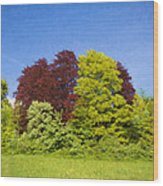 Colourful Trees Wood Print