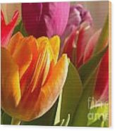 Colourful Tulips In Sunlight Wood Print