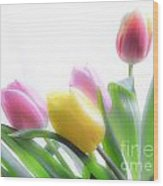 Colourful Tulips That Are Digitally Softened Wood Print