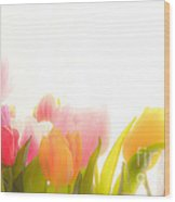 Colourful Tulips That Are Softened Digitally Wood Print