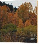 Colours In A Season Wood Print