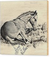 Colt Laying In Grass Wood Print