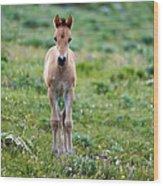 Colt Mustang 1 Wood Print