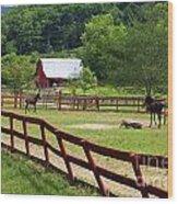 Colts On A Farm Wood Print