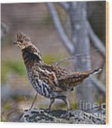 Coltsfoot Ruffed Grouse Wood Print