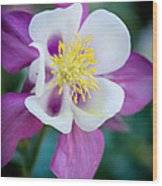 Columbine 3 Wood Print