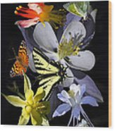 Columbine And Butterfly Collage Wood Print
