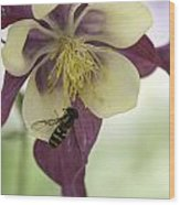 Columbine And The Bee Wood Print