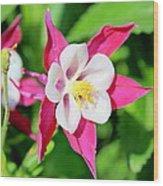 Columbine Aquilegia Wood Print
