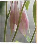 Columbine Bud Wood Print