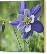 Columbine Card  Wood Print
