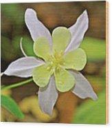 Columbine Charlie's Garden Wood Print