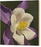 Columbine Floral Wood Print