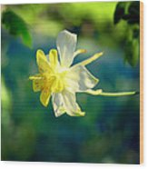 Columbine Flower Wood Print