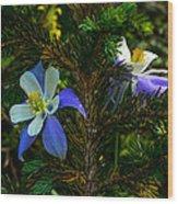 Columbine Flowers And Pine Tree Wood Print