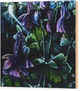 Columbine In The Woods Wood Print