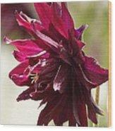 Columbine Named Miss Mi Huish Wood Print