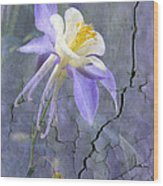 Columbine On Cracked Wall Wood Print by James Steele