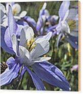 Columbine Wildflowers Wood Print