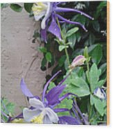 Columbines Exquisite Blooms Wood Print