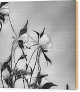 Columbines In Black And White Wood Print