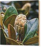 columnar Southern magnolia Wood Print