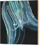 Comb Jelly Wood Print