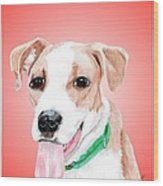 Comet A Former Shelter Sweetie Wood Print