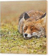 Comfortably Fox Wood Print