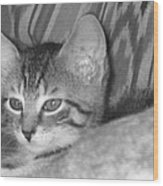 Comfy Kitten Wood Print