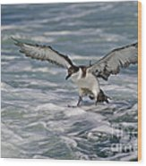 Coming In For Landing... Wood Print
