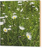 Coming Up Daisy's Wood Print