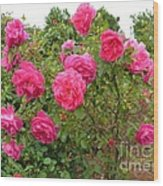 Coming Up Rosy Wood Print