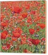 Commemorative Poppies Wood Print