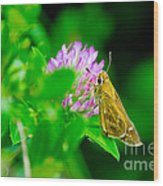 Common Banded Skipper Wood Print