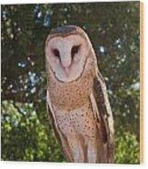 Common Barn Owl 1 Wood Print