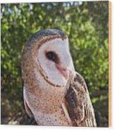 Common Barn Owl 10 Wood Print