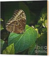 Common Blue Morpho Moth Wood Print