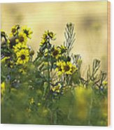 Common Brighteyes Natural Bouquet Wood Print