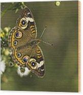 Common Buckeye 1 Wood Print