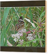 Common Buckeye Butterfly - Junonia Coenia Wood Print