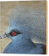 Common Crowned Pigeon Wood Print