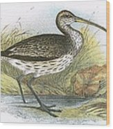 Common Curlew Wood Print