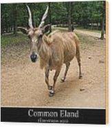 Common Eland Wood Print by Chris Flees