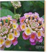 Common Lantana Flower Wood Print