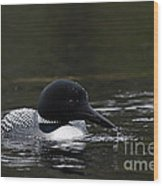 Common Loon 1 Wood Print by Larry Ricker