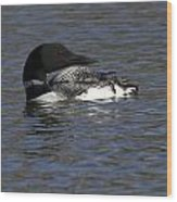 Common Loon 39 Wood Print