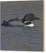 Common Loon 51 Wood Print