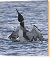 Common Loon 69 Wood Print