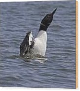Common Loon 76 Wood Print